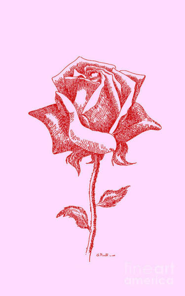 Drawing - iPhone-Cases-Rose-3 by Gordon Punt