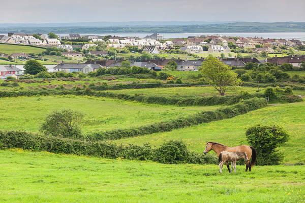Clare Photograph - Ireland, County Clare, Killrush by Walter Bibikow