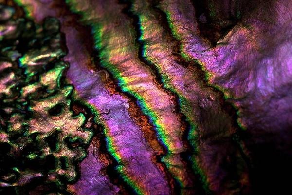 Mother Of Pearl Photograph - Iridescent Nacre Abalone Shell Colour 2 by Paul D Stewart