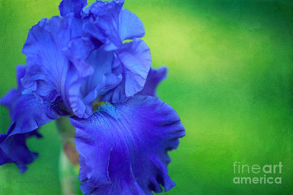 Photograph - Iridescent One by Beve Brown-Clark Photography