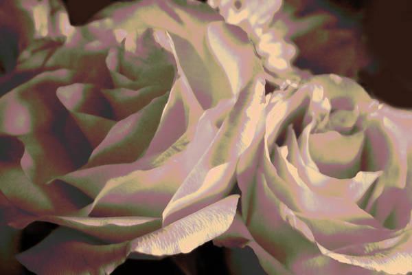 Purple Rose Digital Art - Iridescent Twin Roses by Linda Phelps