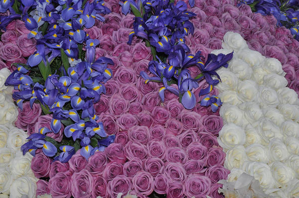 Tournament Of Roses Photograph - Iris And Roses From The Rose Bowl Parade by Diane Lent