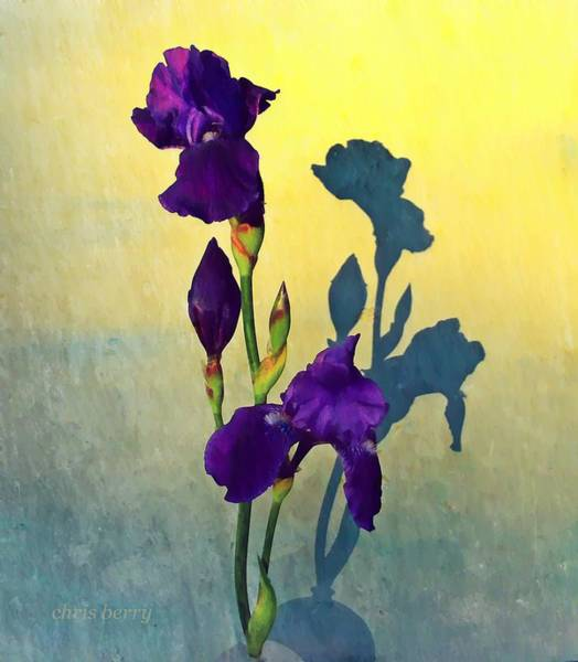 Wall Art - Photograph - Iris At Sunrise by Chris Berry