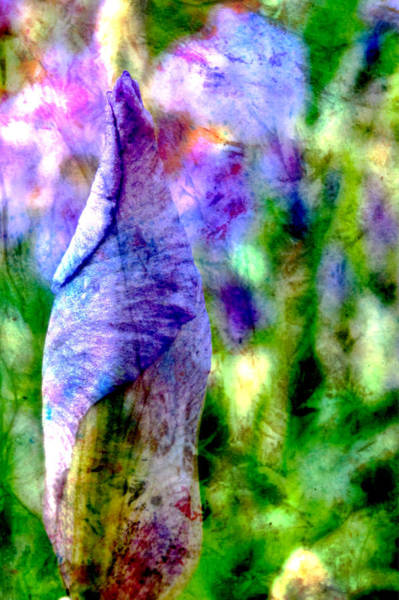 Digital Art - Iris Bud And Abstract Painting by Anita Burgermeister