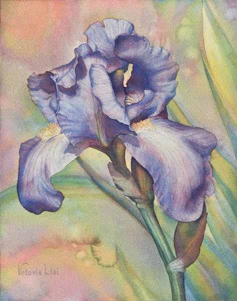 Painting - Iris Dreaming by Victoria Lisi