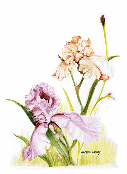 Painting - Iris Duo by Rachel Lowry