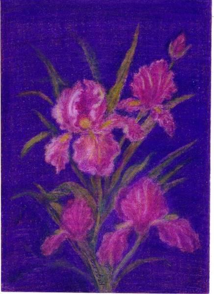 Drawing - Iris Illusion by Regina Taormino