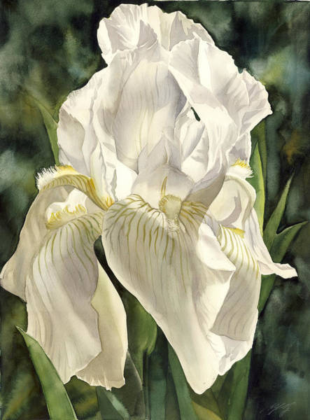 Painting - Iris In Spring by Alfred Ng