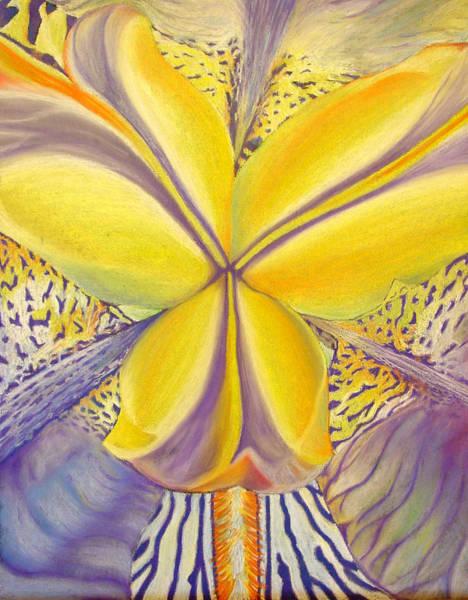 Close Up Drawing - Iris by Joshua Morton