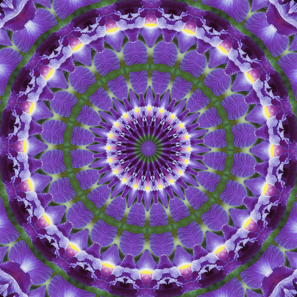Photograph - Iris Kaleidoscope  by Denise Beverly
