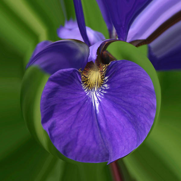 Photograph - Iris Leaf by Jim Baker