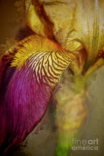 Painting - Iris Mood by Deborah Benoit
