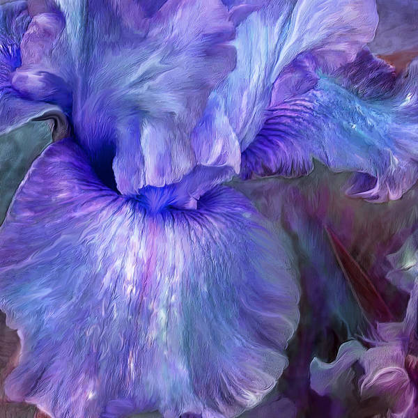 Purple Iris Mixed Media - Iris Moods 1 by Carol Cavalaris