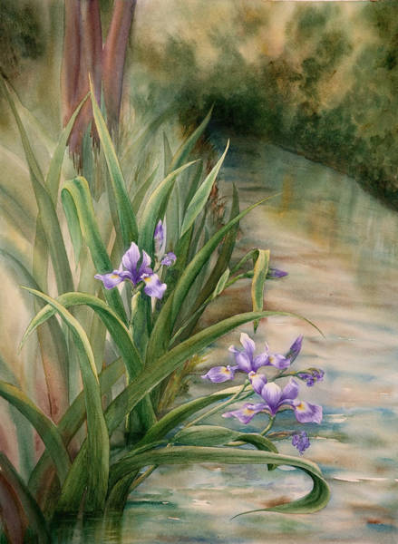 Iris Over The Inlet Art Print