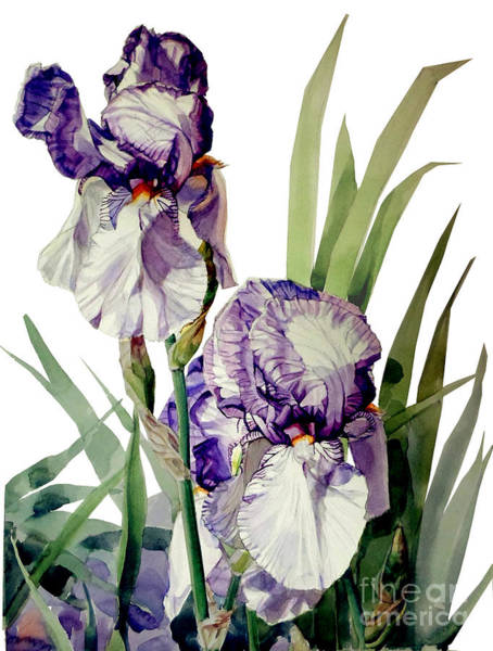 Painting - Watercolor Of A Tall Bearded Iris In Violet And White I Call Iris Selena Marie by Greta Corens
