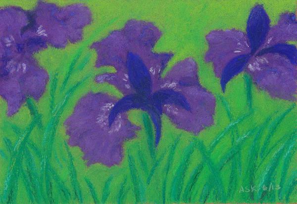 Pastel - Iris Sweetness by Anne Katzeff
