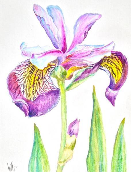 Ir Painting - Iris by Virginia Ann Hemingson