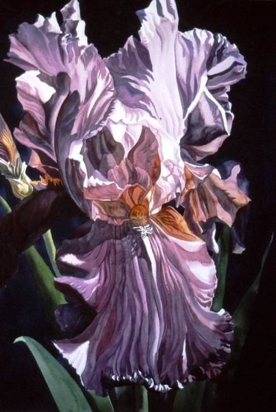 Iris With Light Art Print