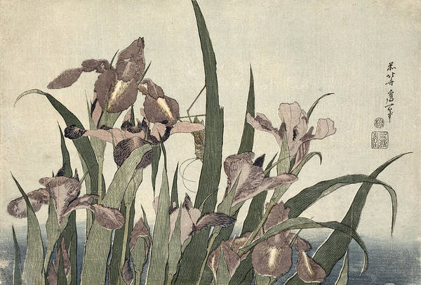 Far East Painting - Irises And Grasshopper by Katsushika Hokusai