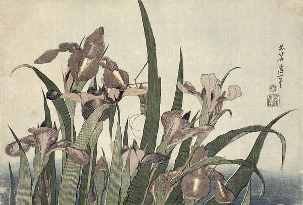 Hokusai Wall Art - Painting - Irises And Grasshopper by Katsushika Hokusai