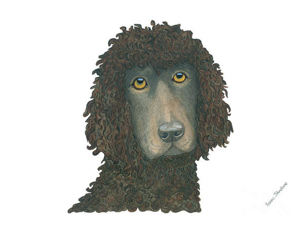 Field Spaniel Painting - Irish Water Spaniel by Yvonne Johnstone