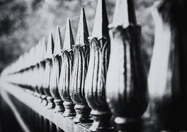 Photograph - Iron Fence by Ryan Wyckoff