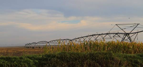 Wall Art - Photograph - Irrigation On The Farm by Dan Sproul