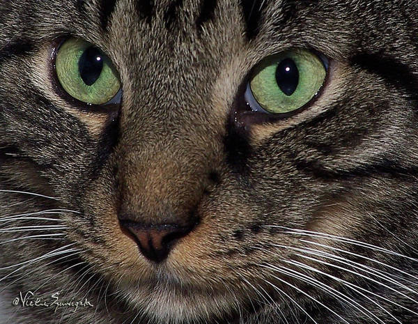 Photograph - Isaac's Eyes by Vickie Szumigala