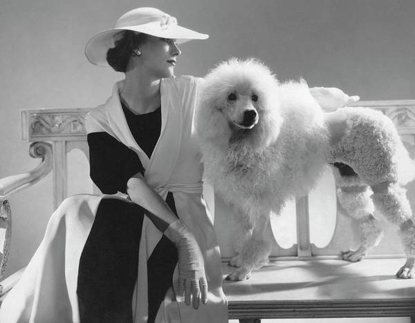 Pet Photograph - Isabel Johnson With A Poodle by Edward Steichen
