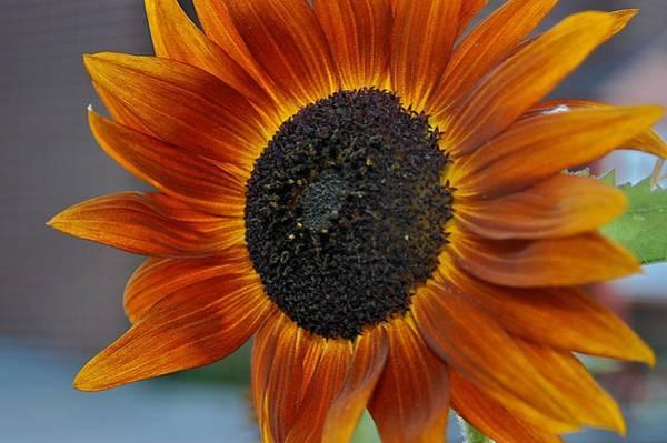 Photograph - Isabella Sun by Joseph Yarbrough