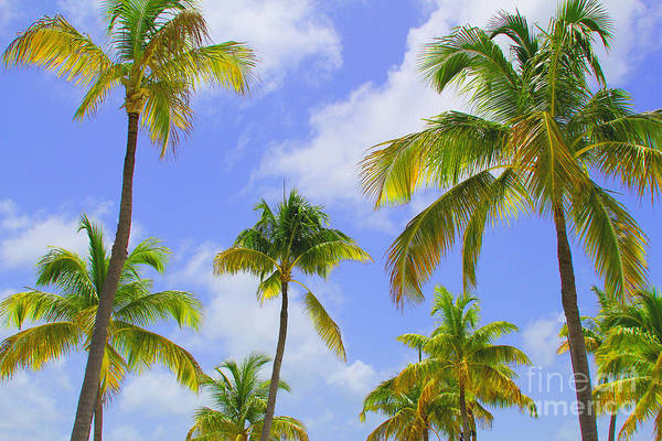 Coconut Trees Photograph - Isla Palms by Carey Chen