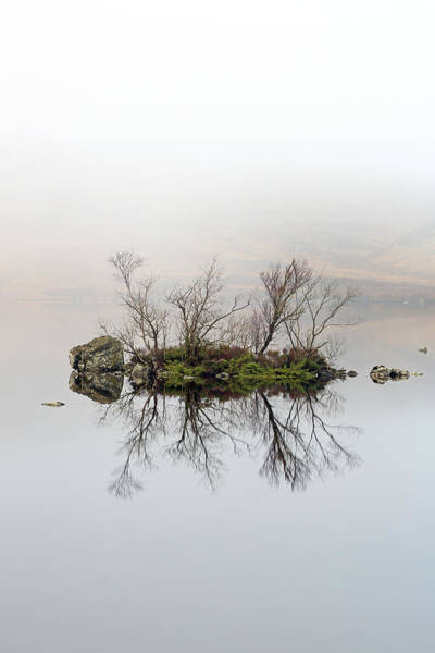 Photograph - Island Of Trees Reflection by Grant Glendinning