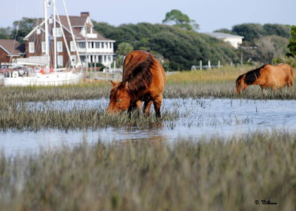 Photograph - Island Ponies And Beaufort Homes by Dan Williams