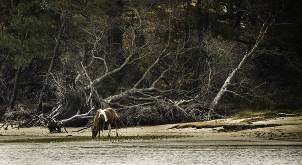 Photograph - Island Pony by Donald Brown