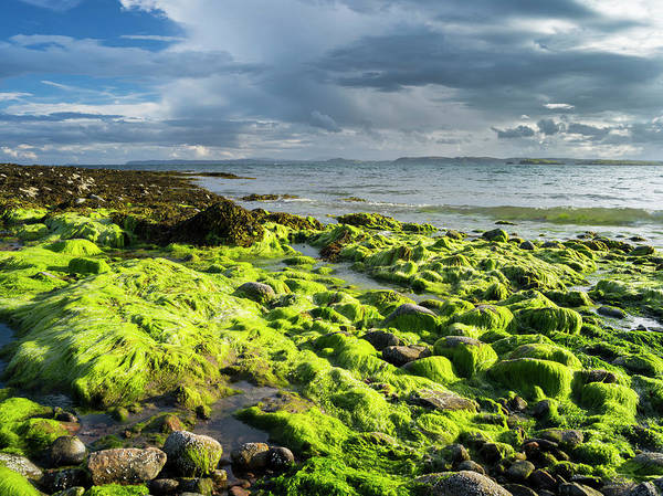 Kelp Photograph - Isle Of Lewis, Coast At The Eye by Martin Zwick