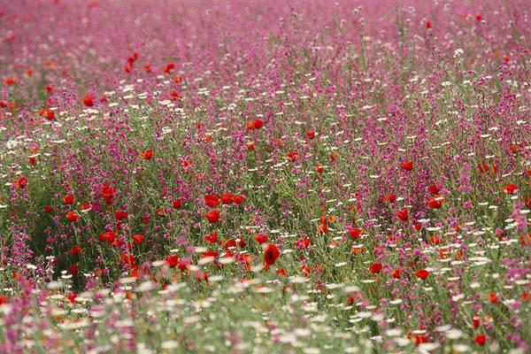Kibbutz Photograph - Israeli Wildflower Farming On A Kibbutz by Richard Nowitz