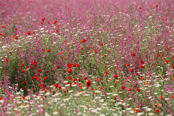 Wall Art - Photograph - Israeli Wildflower Farming On A Kibbutz by Richard Nowitz