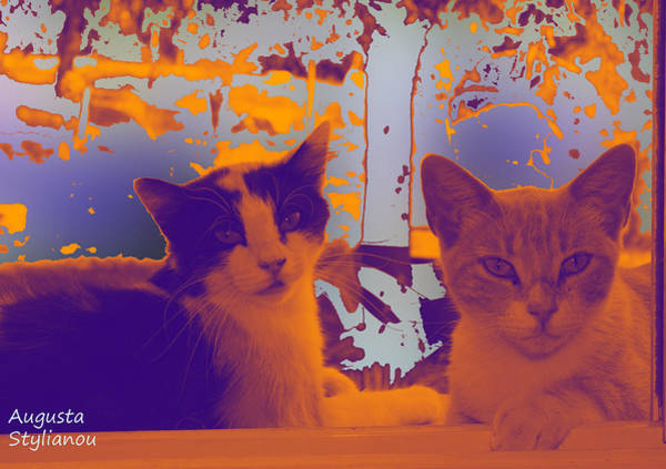 Photograph - Istar And Aphrodite Cats by Augusta Stylianou