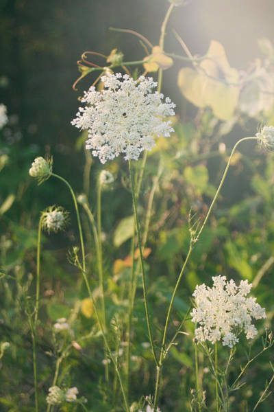 Summer Flowers Photograph - It Was A Summer Of Love by Laurie Search