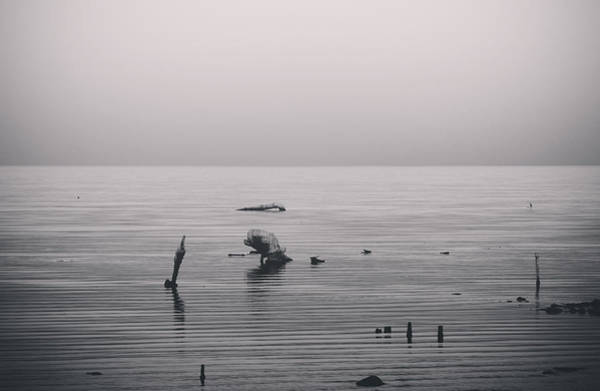 Photograph - It Was Lonely There by Laurie Search