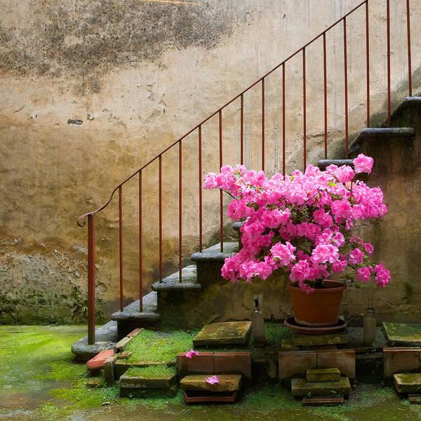 Photograph - Italian Azalea Staircase by Bob Coates