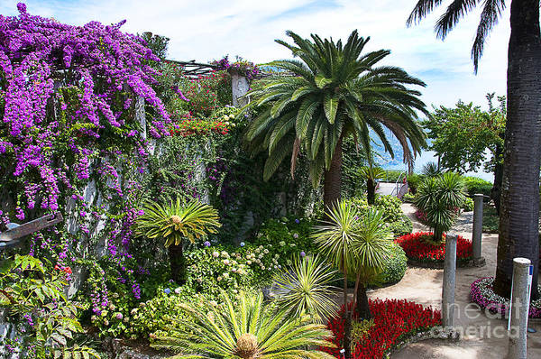 Photograph - Italian Garden by Brenda Kean