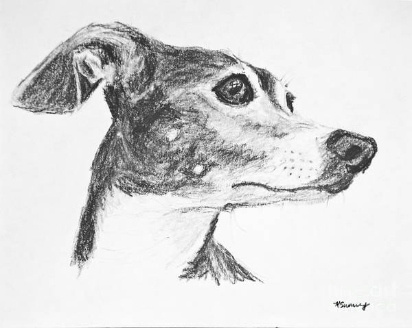 Skinny Drawing - Italian Greyhound Sketch In Profile by Kate Sumners