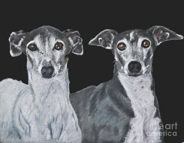 Art Print featuring the painting Italian Greyhounds Portrait Over Black by Kate Sumners