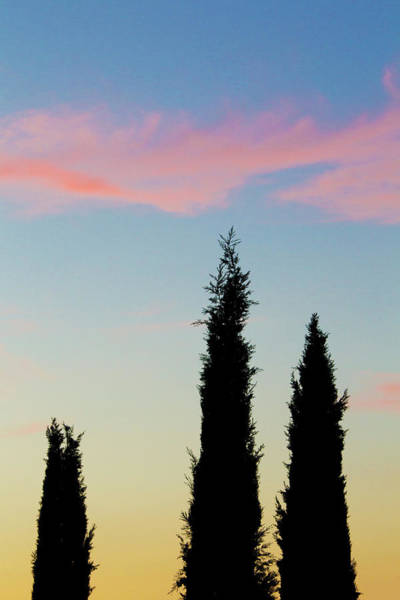 Three Trees Photograph - Italy, Orvieto Cypress Trees And Cloud by Jaynes Gallery