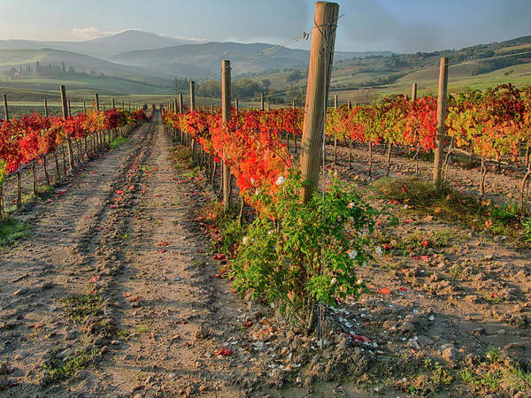 Away From It All Wall Art - Photograph - Italy, San Quirico, Autumn Vineyard by Terry Eggers