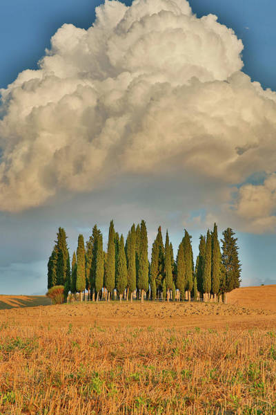 Cumulus Photograph - Italy, Tuscany Cypress Grove by Jaynes Gallery