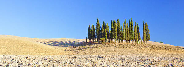 Wall Art - Photograph - Italy, Tuscany Cypress Grove Panoramic by Jaynes Gallery