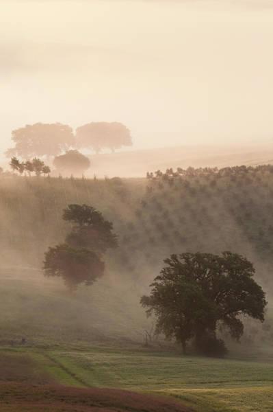 Wall Art - Photograph - Italy, Tuscany Fog Drifts Around Vines by Brenda Tharp