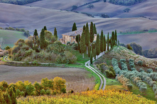 Villa D Wall Art - Photograph - Italy, Tuscany, The Road Home by Hollice Looney